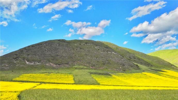 风华绝代甘南州:高原上的遍地金黄 - H哥 - H哥的博客