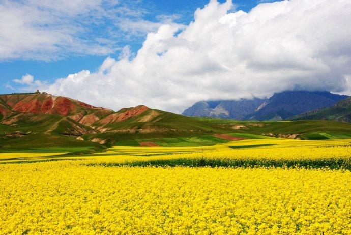 天境祁连,油菜花开美如海 - H哥 - H哥的博客