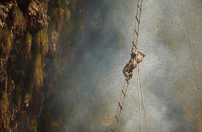 实拍尼泊尔万丈悬崖上的采蜜人 - 海军航空兵 - 海军航空兵
