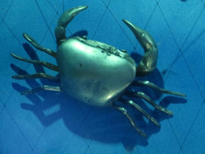 壁纸 动物 海底 海底世界 海洋馆 水族馆 鱼 鱼类 690_517