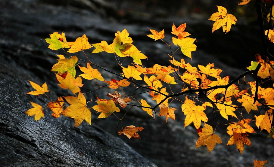 神农架撞上秋,邂逅不一样的生活 - 海军航空兵 - 海军航空兵