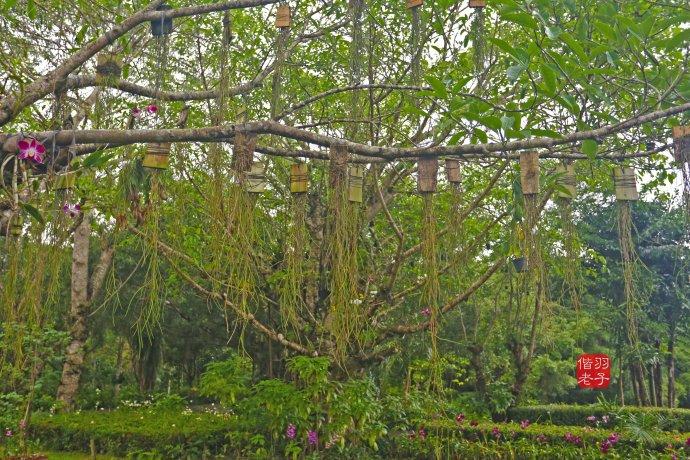 【海南 万宁】椰风海韵外的海南,请到兴隆深呼吸【转自搜狐】 - 叶曾蓉 - 103岁叶曾蓉天师妈妈的博客-纵地金光法