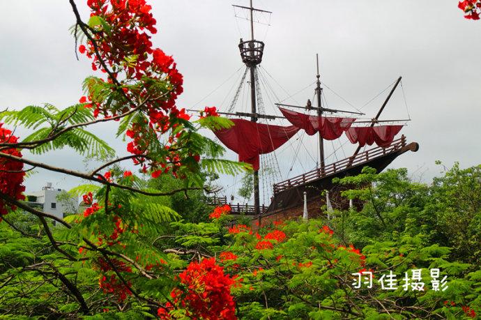 【深圳】暴雨后深圳凤凰花开如火如荼 - 海军航空兵 - 海军航空兵