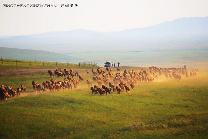在呼伦贝尔草原最美的季节,与骏马相会 - H哥 - H哥的博客