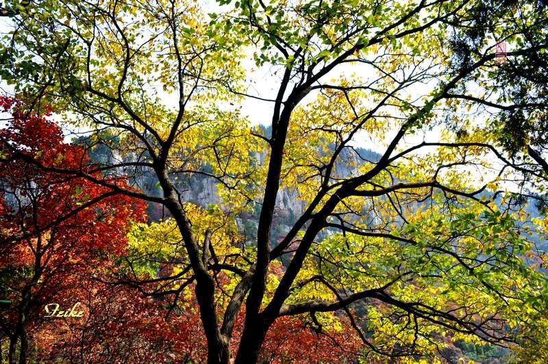 【原创影记】齐鲁观红叶——临朐石门坊2 - 古藤新枝 - 古藤的博客