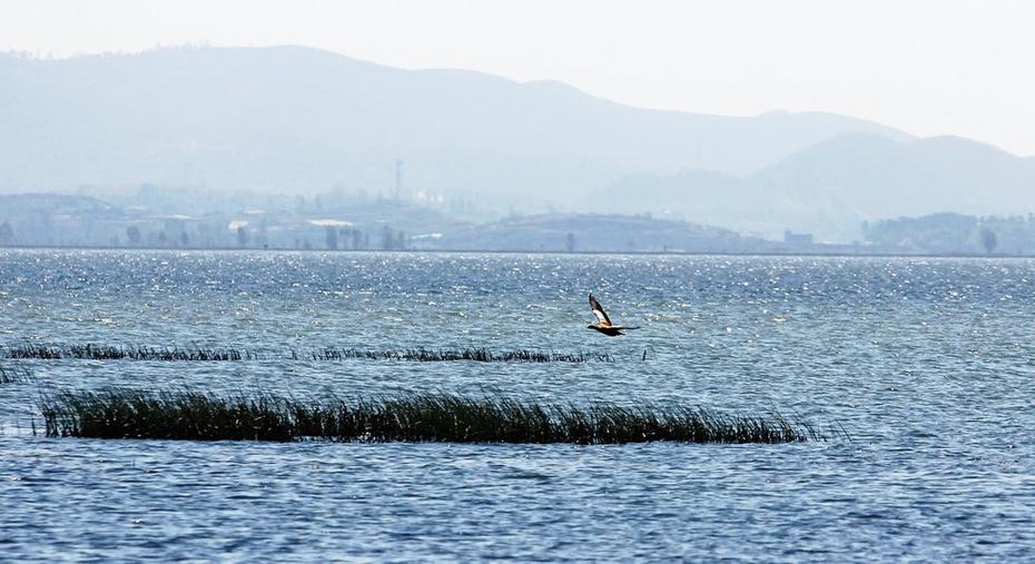 碧波无垠鹳鸟飞,草海泛舟风光美--黔南游二十一 - 侠义客 - 伊大成 的博客