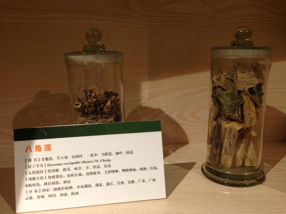 壮乡植物王国:桂林植物园 - 余昌国 - 我的博客