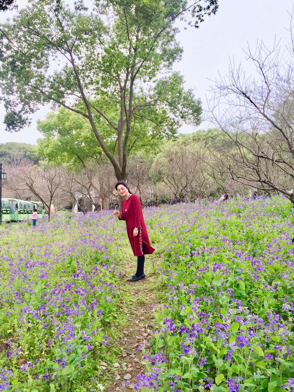 从石湖到上方山 - 蔷薇花开 - 蔷薇花开的博客