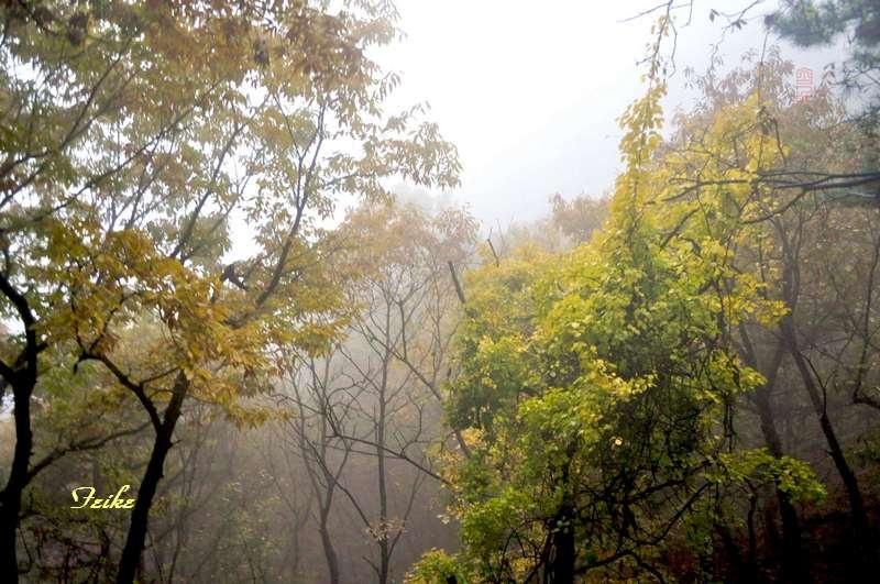 【原创影记】鲁中览秋色——平邑蒙山(龟蒙)2 - 古藤新枝 - 古藤的博客
