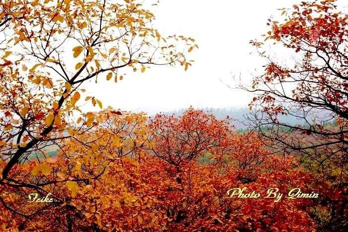 【原创影记】齐鲁观红叶——青州大牟西3 - 古藤新枝 - 古藤的博客