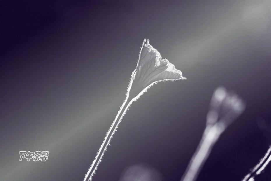 【秋天】白露节气赏拍露水 - 下午茶馨 - 下午茶馨网易博客