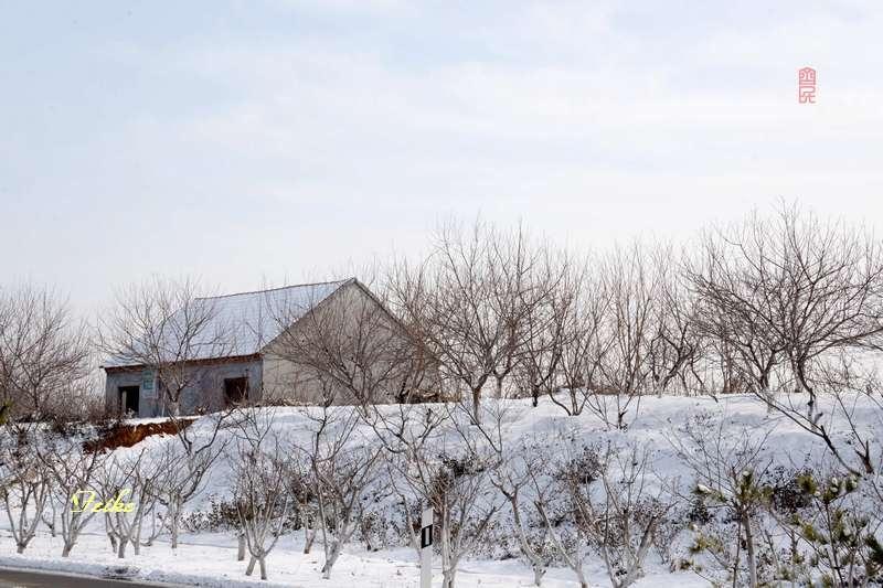 春节影记4——雪后拾景 - 古藤新枝 - 古藤的博客