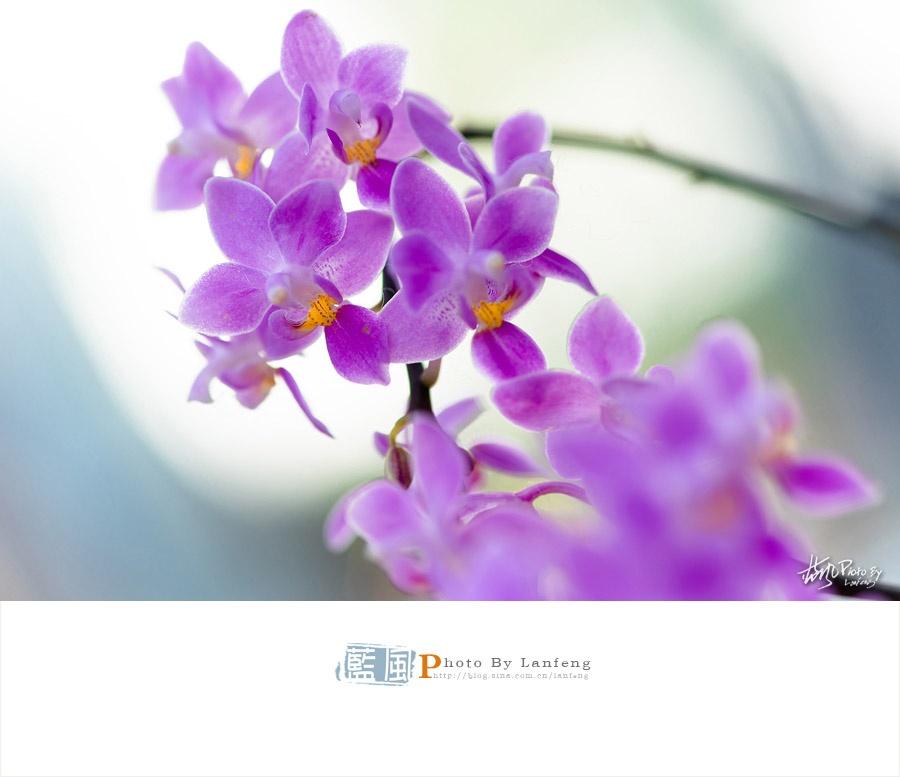 【上海】魔都最美国际兰展,惊艳这个春天 - 蓝风 - 蓝风的图像家园
