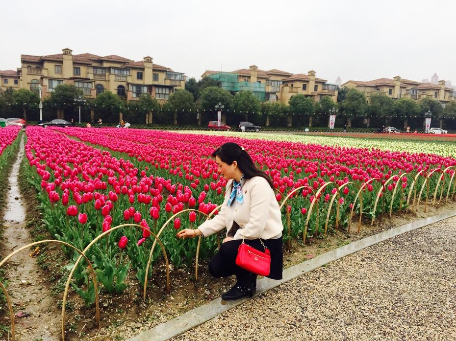 一年一度,赴一场郁金香之约 - 蔷薇花开 - 蔷薇花开的博客