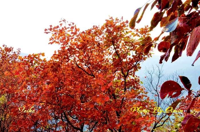 【原创影记】齐鲁观红叶——博山和尚房3 - 古藤新枝 - 古藤的博客