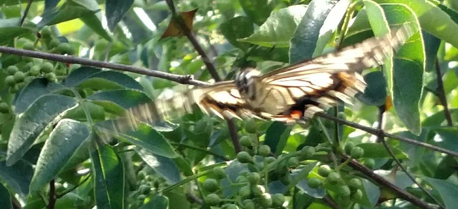 2017-6-10 影随风2017季-31 帝都,大旱之夏1 - stew tiger - 风过的声音