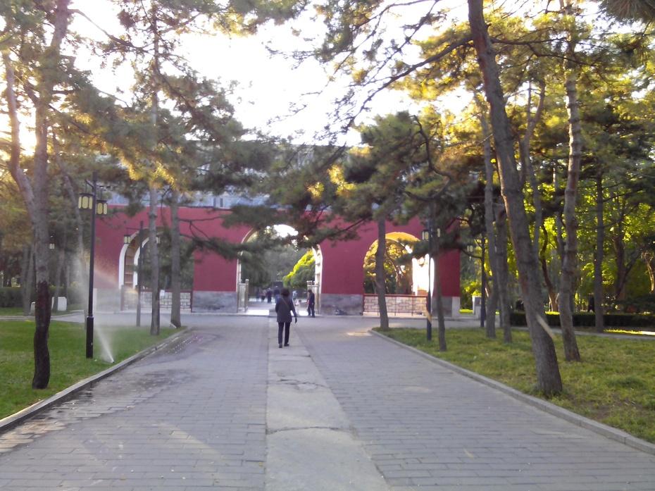 银杏黄——北京日坛公园游记4 - ydq200888 - ydq200888的博客