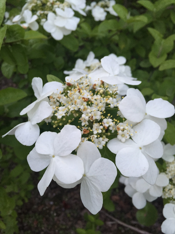 扬州游之七——琼花观 - 蔷薇花开 - 蔷薇花开的博客