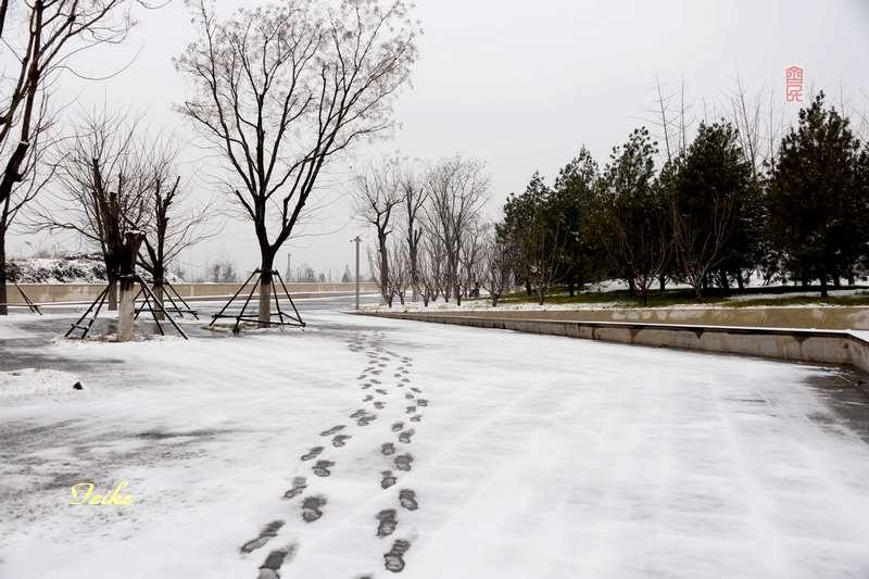 春节影记2——植物园足球馆 - 古藤新枝 - 古藤的博客