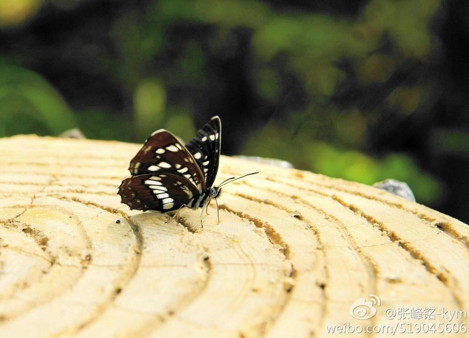 【原创】迷离 - lurenlaobao2009 - lurenlaobao2009的博客