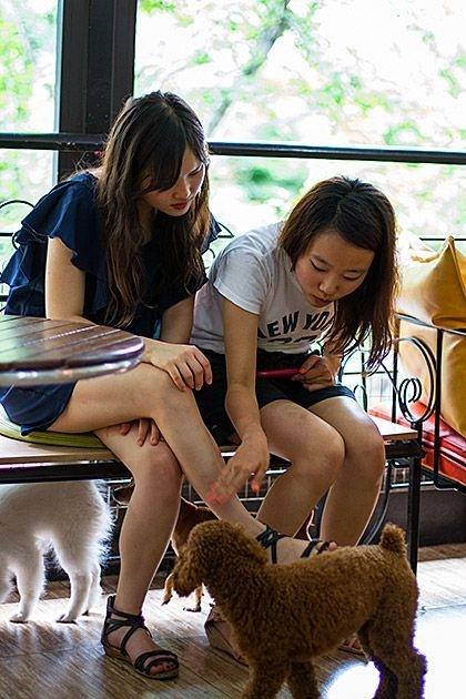 萌宠集结令 咖啡馆里的心灵治愈师 - 嘉人marieclaire - 嘉人中文网 官方博客