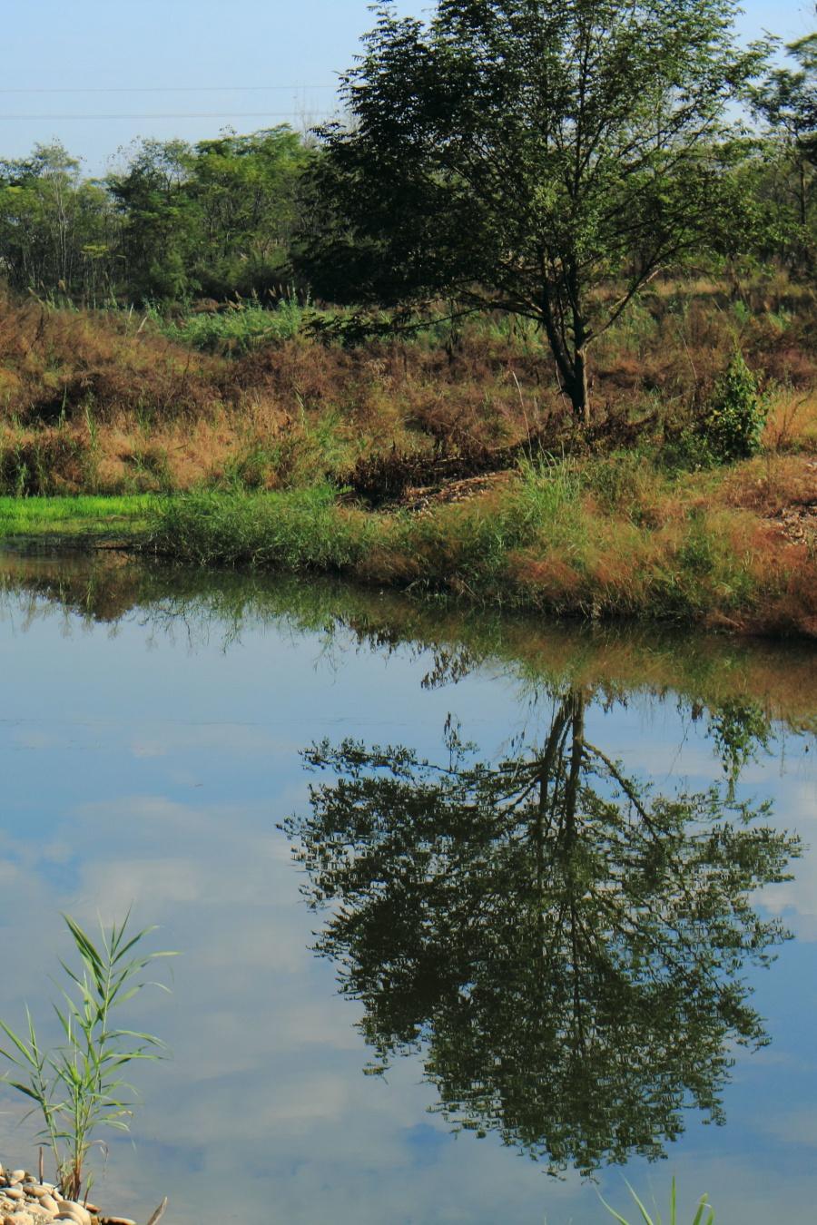 丽水之美:水草丰茂的九龙湿地 - 海军航空兵 - 海军航空兵