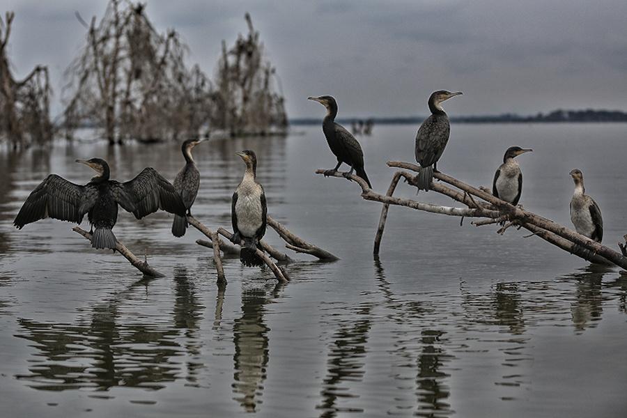 河里边的动物图片
