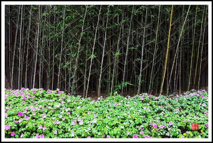 耶!城市森林 - 下午茶馨 - 下午茶馨网易博客