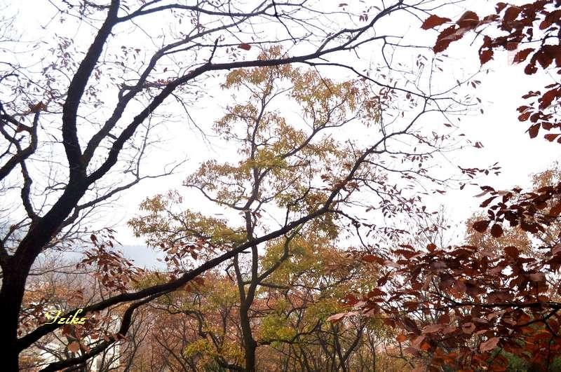 鲁中览秋色——平邑蒙山(龟蒙)1 - 古藤新枝 - 古藤的博客