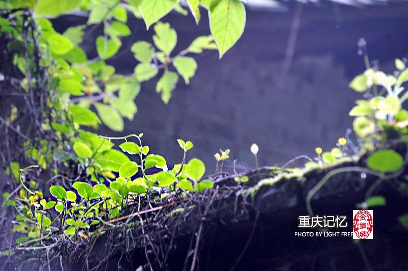 【重庆记忆】金钢碑,在废墟中寻找那些传奇 - 海军航空兵 - 海军航空兵