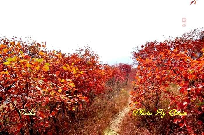 【原创影记】齐鲁观红叶——博山和尚房2 - 古藤新枝 - 古藤的博客
