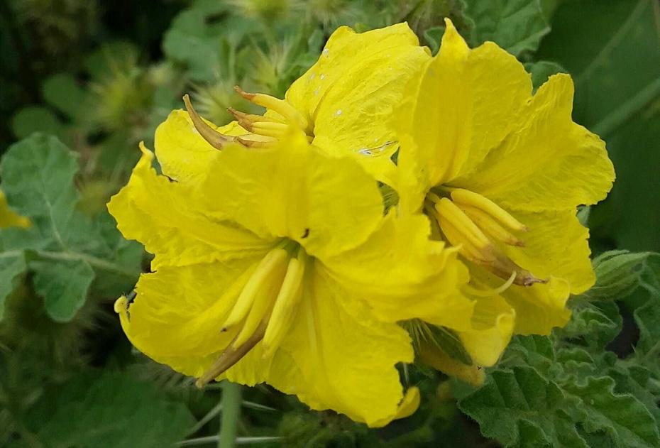 花卉之:野花(1) - 淡淡云 - 淡淡云