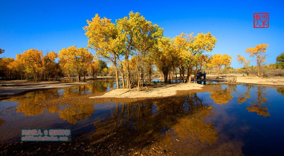 额济纳: 金色的胡杨和梦中的驼铃 - 古藤新枝 - 古藤的博客