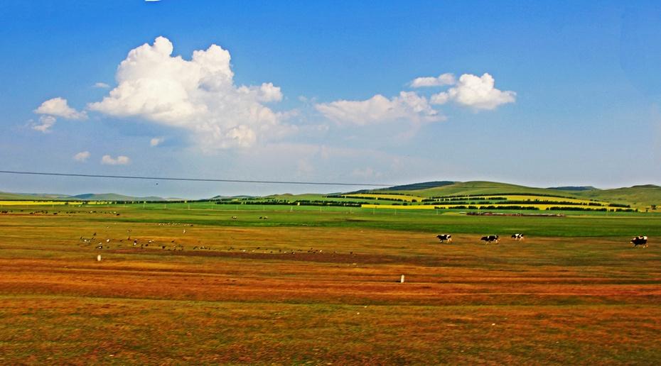 呼伦贝尔金帐汗,油菜花开大草原--暑期东北行之十四 - 侠义客 - 伊大成 的博客