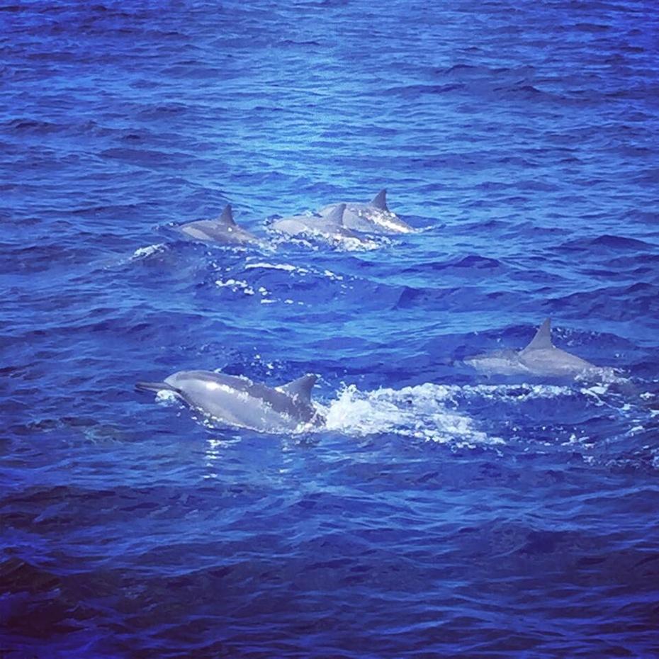 【周若雪Patty】西太平洋上的宝石关岛——出海看海豚 - 周若雪Patty - 周若雪Patty