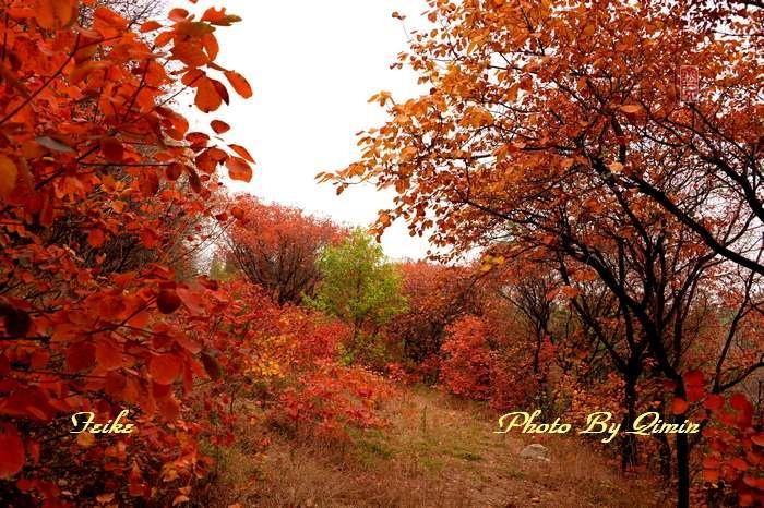 【原创影记】齐鲁观红叶——青州大牟西5 - 古藤新枝 - 古藤的博客