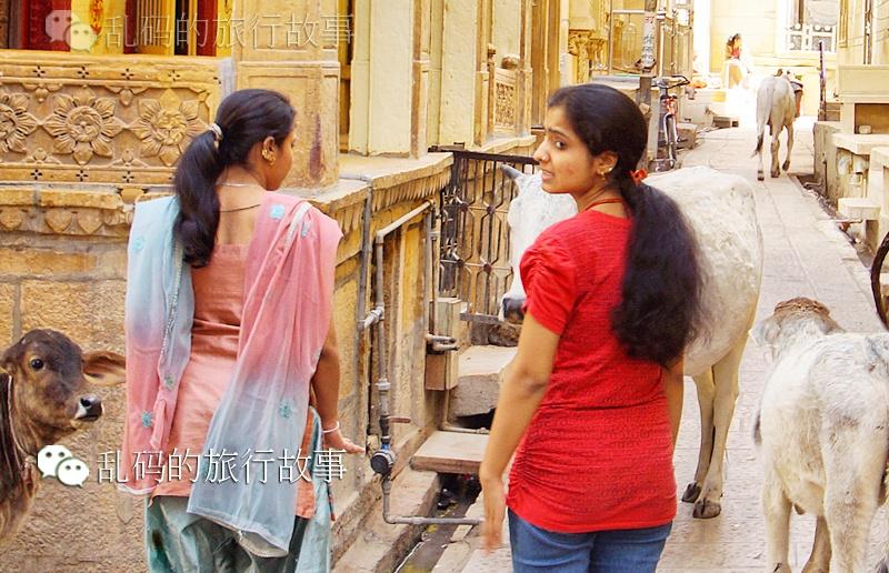 """实拍印度""""好色""""神牛街头横行专抢美女 - 风帆页页 - 风帆页页博客"""