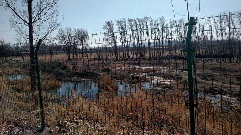 2017-3-7 影随风2017季-13 重走北沙河水系-3 北沙河的水族 - stew tiger - 风过的声音