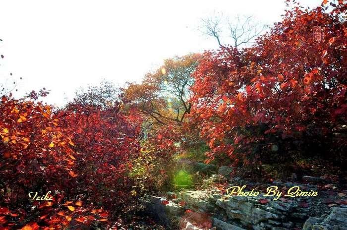 【原创影记】齐鲁观红叶——青州曹家庄 - 古藤新枝 - 古藤的博客