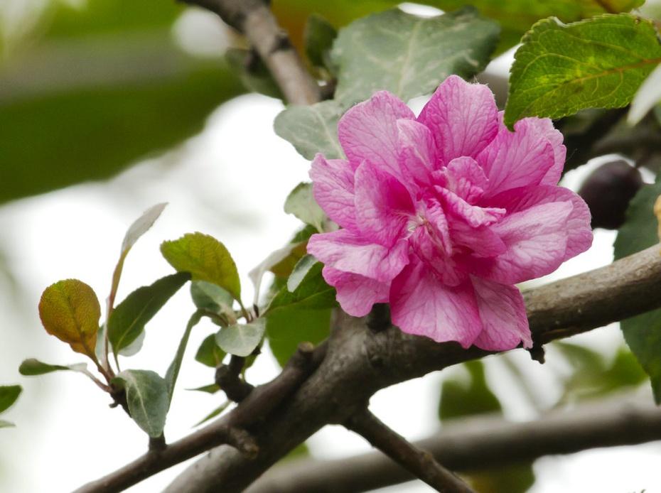 植物园百花比美,芍药园更显娇艳 - 侠义客 - 伊大成 的博客