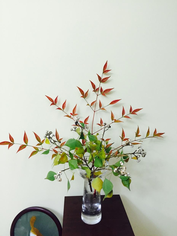 秋叶静美 - 蔷薇花开 - 蔷薇花开的博客