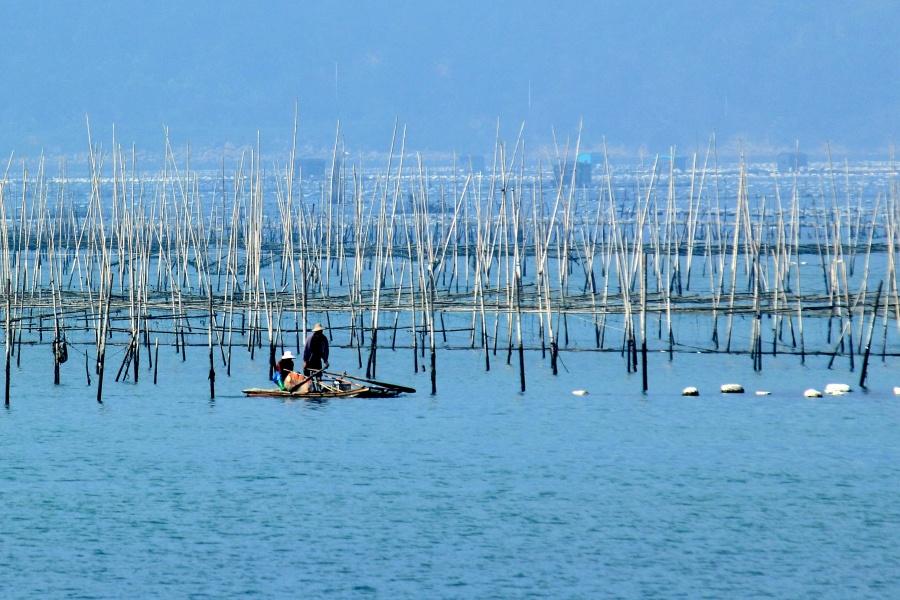 19 金银岛。这处是收费的,门票5元。是很小的一个岛,传说与南澳岛上的海盗有关。金银岛海面十分平静,适合养殖。登岛远望,只见海面白色浮标一望无际,煞是壮观。2 3 4 5 6 7 8 9  1014 海上渔村。渔民为方便养殖管理,在海上建有很多木屋,鳞次栉比。水上渔村离岸很远,最好带上300以上的头子,我的250头子拉不近。11 12 13 14  1519 渔民收获海胆和海藻,请当地妇女取胆和清理。南澳的海产品非常丰富而便宜,不过因为南澳大桥开通,游客增多,据说也涨价不少了。 16 海胆是名贵的药材 1