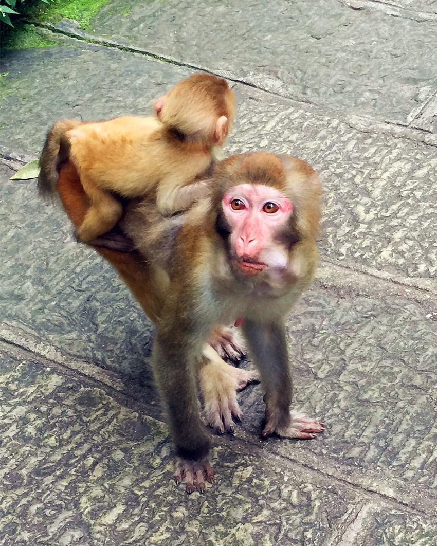张家界的小猴子 - yushunshun - 鱼顺顺的博客