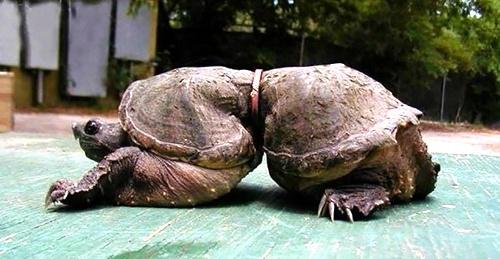 啥样_海龟用\