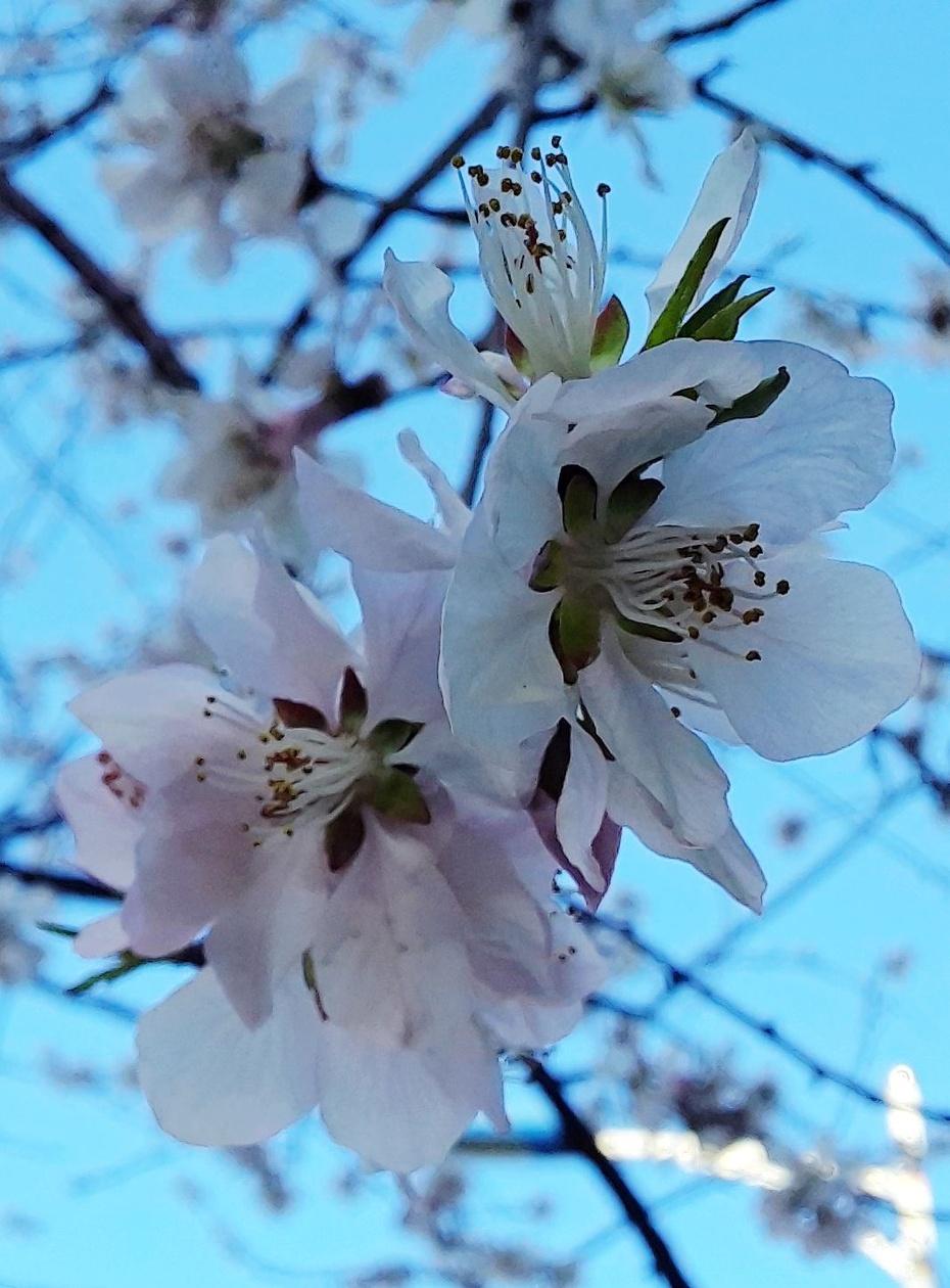 春天来啦 - 淡淡云 - 淡淡云
