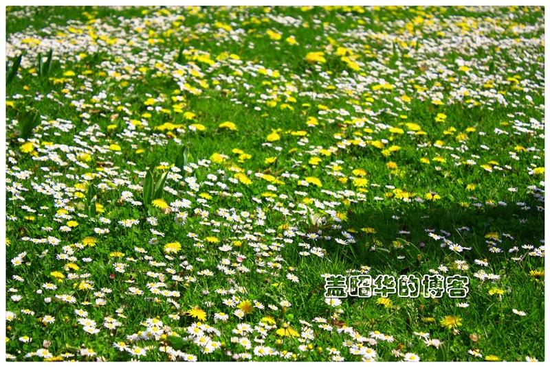 德国的春天有多美 - 盖昭华 - 盖昭华的博客
