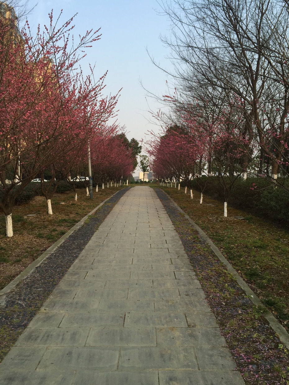 苏州河边赏梅记 - 蔷薇花开 - 蔷薇花开的博客