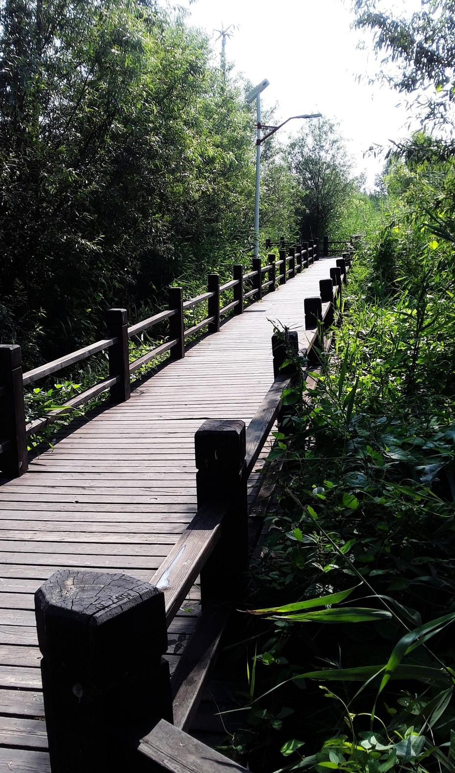 赏游:喀左湿地公园 - 淡淡云 - 淡淡云