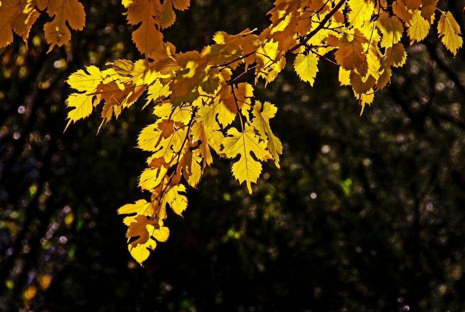 秋色浓浓植物园 - 侠义客 - 伊大成 的博客