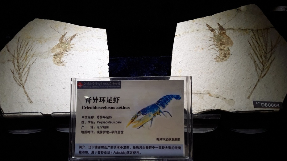化石谷(2) - 淡淡云 - 淡淡云